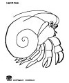 A house for hermit crab activities games printables