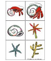 A house for hermit crab activities   games   printablesHermit crab game